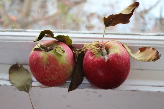 Ginger and Apple Muffins | Vegan | Gluten Free