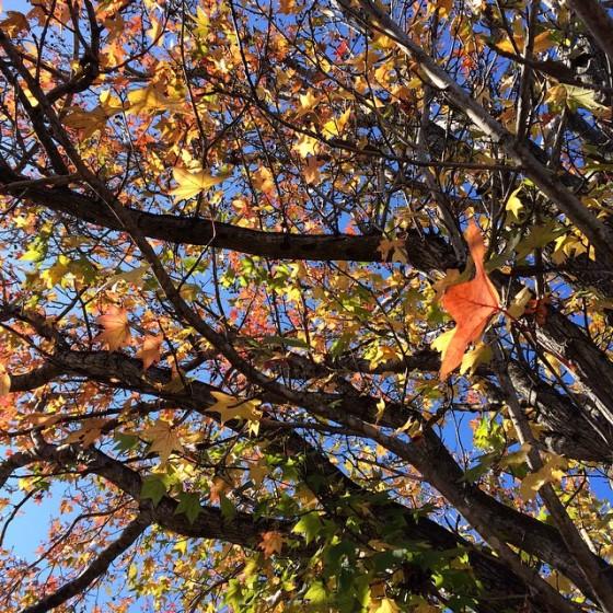wk 27 leaves
