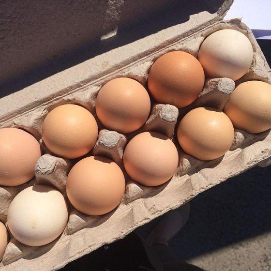 wk 36 eggs