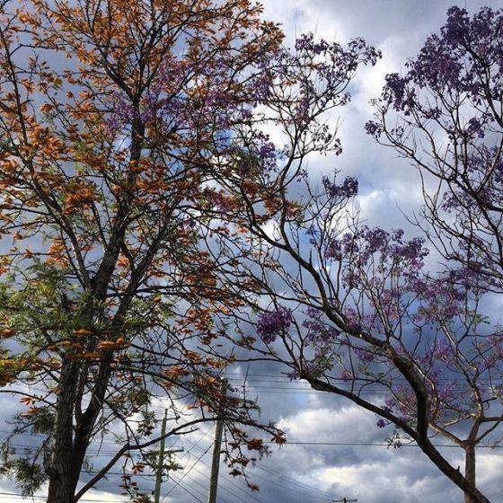 wk 44 trees
